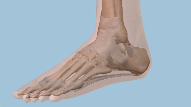 Find a Treatment for Foot or Ankle Pain